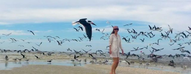 woman on sandbar among gulls